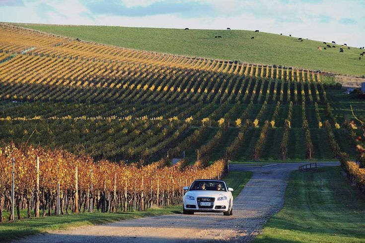 Tamar Valley Wine Route - starting in Launceston #launceston #tasmania #travel