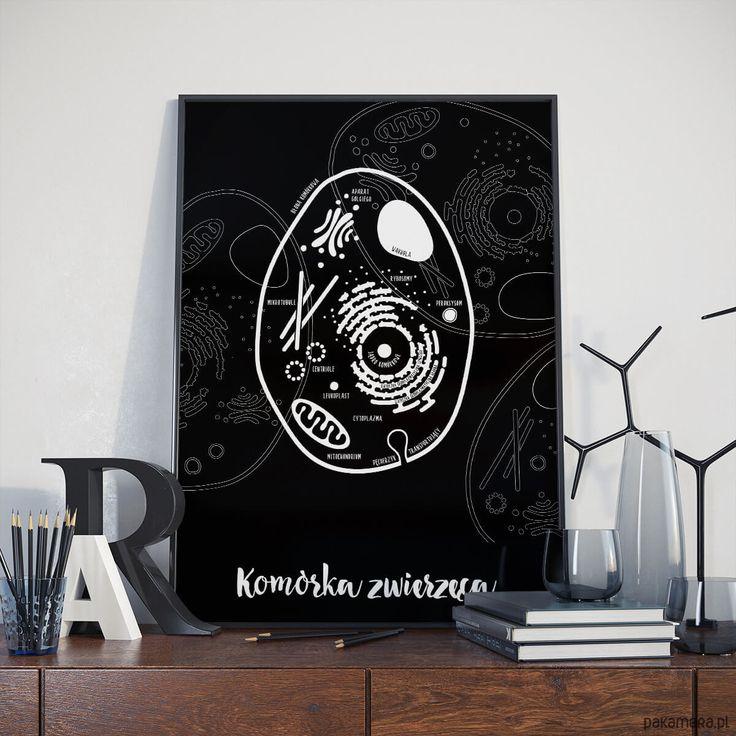 plakaty-Plakat 30x40 cm - Komórka Zwierzęca