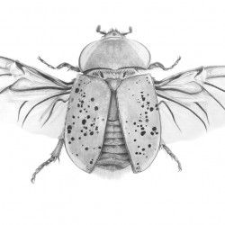 Natural history illustrations   Stephanie Holm