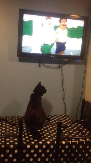 I like tv