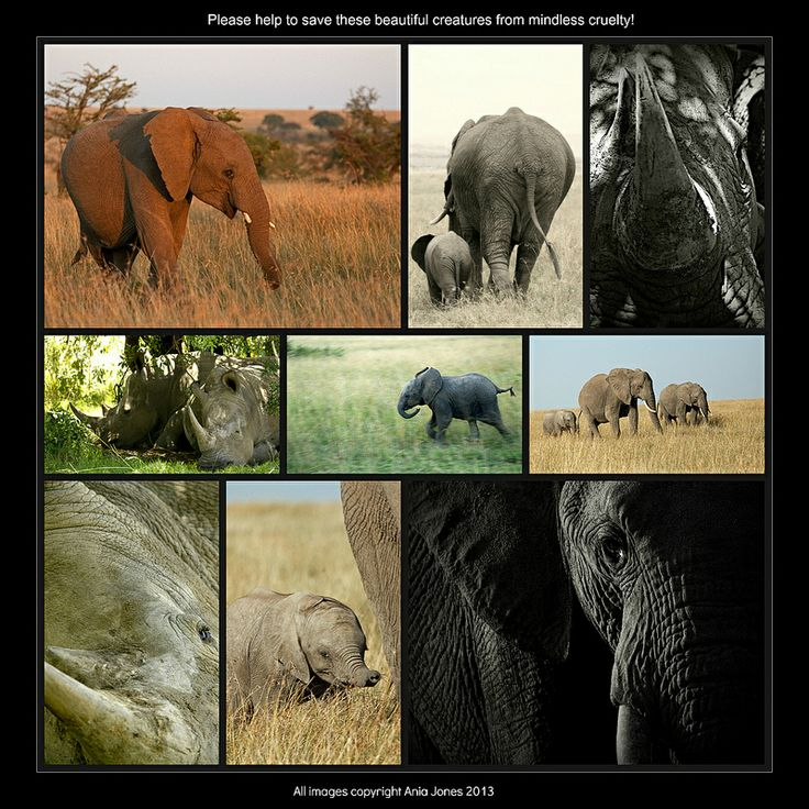 Elephants & Rhinos - Please help to save these wonderful creatures from the mindless idiots out there!