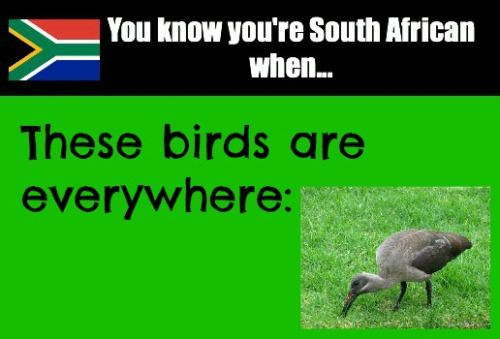 ... and you may be a South African living in another country when you actually miss them :)