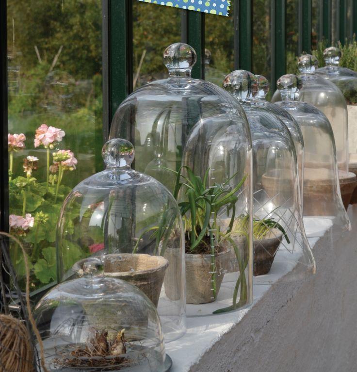 Wanneer alles begint te groeien op uw vensterbank, begint het voorjaar toch een klein beetje eerder.