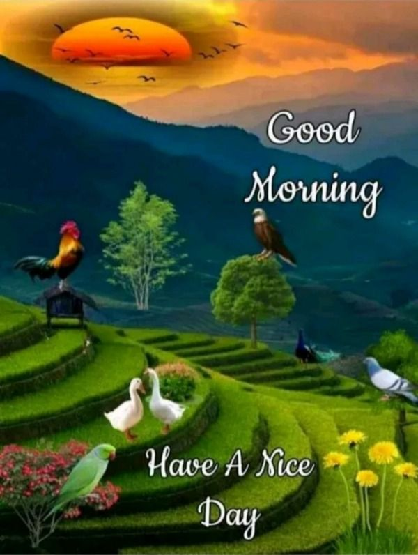 Picture Have A Nice Day In 2020 Morning Pictures Good Morning Picture Morning Images