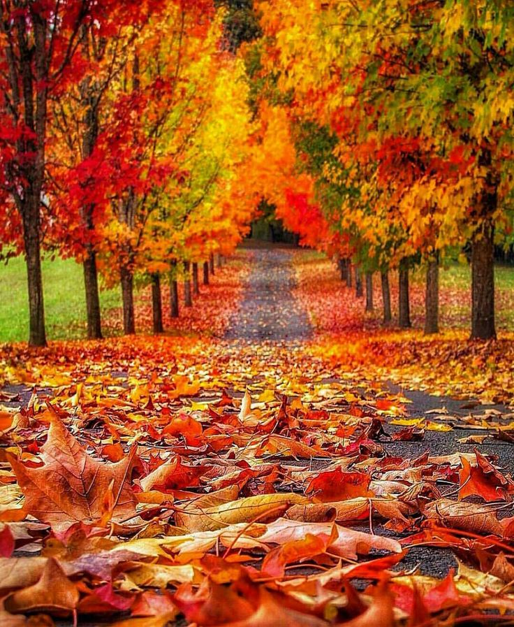 Autumn colors ablaze!