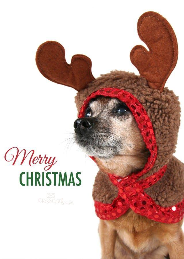 27+ Merry christmas dog clipart ideas