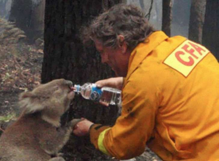 A firefighter gives water to a koala in the midst of the Black Saturday bush fires in Victoria, Australia in 2009