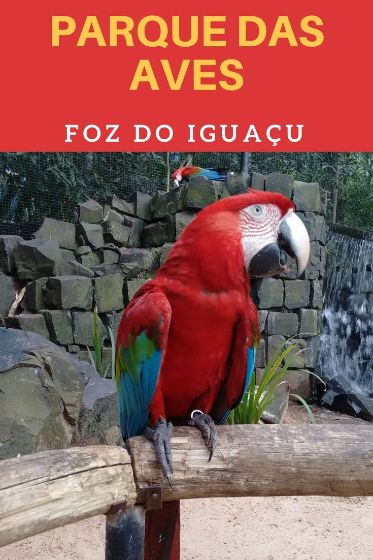 O Parque das Aves em Foz do Iguaçu no Paraná é o maior parque de aves da America Latina, está localizado  ao lado do Parque Nacional do Iguaçu, onde estão as Cataratas do Iguaçu do lado brasileiro. O Parque das Aves não é um zoológico é um centro de recuperação de aves de várias espécies do Brasil e do mundo que vale a pena está no roteiro de viagem em Foz do Iguaçu.