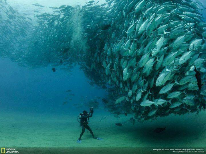 Sea a world