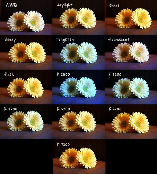 Photography Lesson: Understanding White Balance