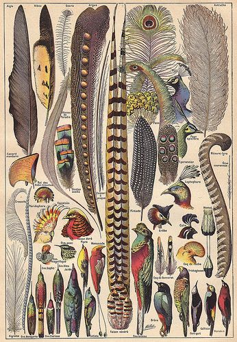 Plumes ~ a plate from the 2-volume Larousse Universel, a French illustrated encyclopedia published in 1922 by Éditions Larousse and edited by Claude Augé from the original work of Pierre Larousse. Photo via Ωméga@ Flickr