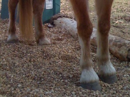 pea gravel -use around feeding area and in paddock for drainage and to make hooves tuff!