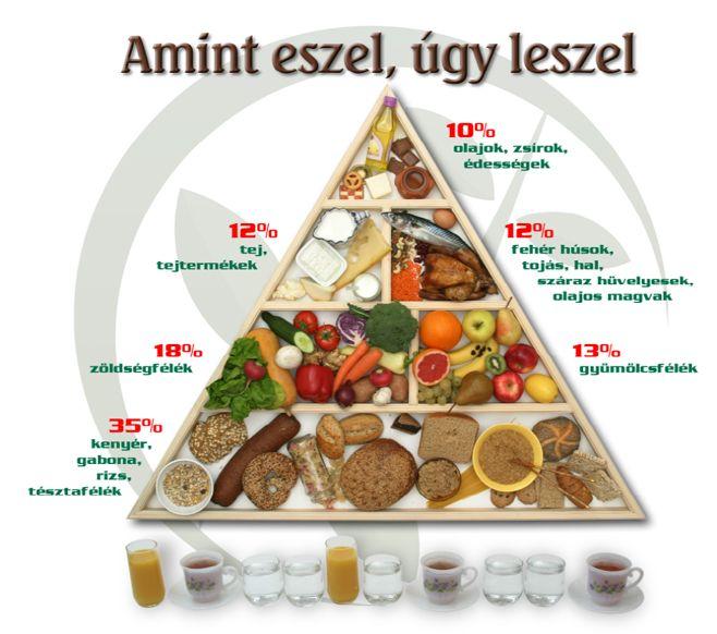 táplálkozási piramis - Google keresés