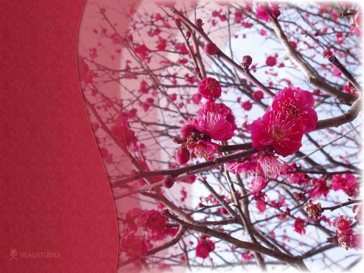 119 best Windows Wallpapers images on Pinterest | Desktop ...
