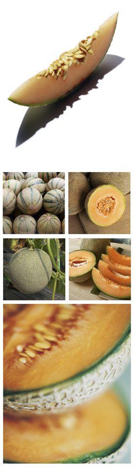 Extrakt aus der Cantaloup-Melone ist reich an Anti-Oxidantien, schützt die Zellen der Haut vor oxidativem Stress durch UV-Strahlung und Umweltbelastungen. #clarins #uvplus