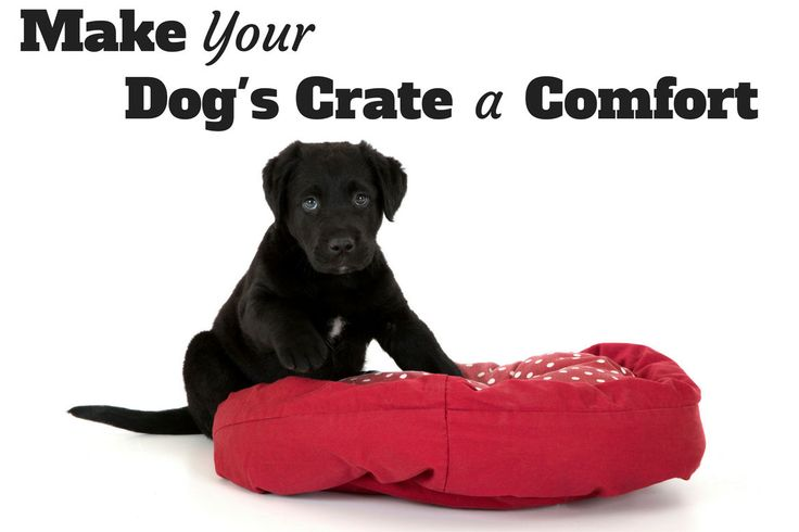 After selecting the right size crate (andif you need help, please see our handy dog crate size guide) you want tomake it a pleasant and welcoming place for your dog to…