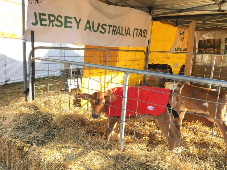 2017 Agfest in Tasmania.