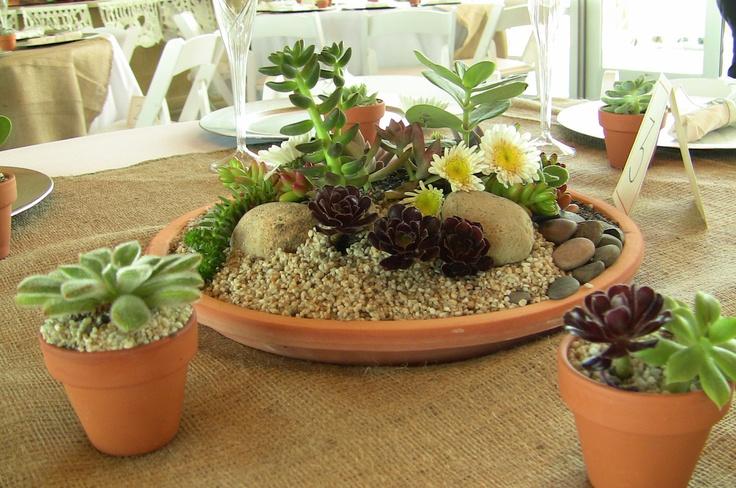 Succulent dish garden splendor