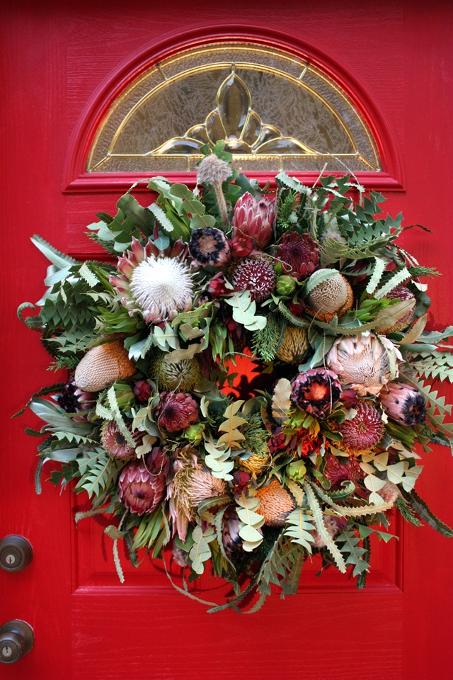 Protea in a Christmas wreath.