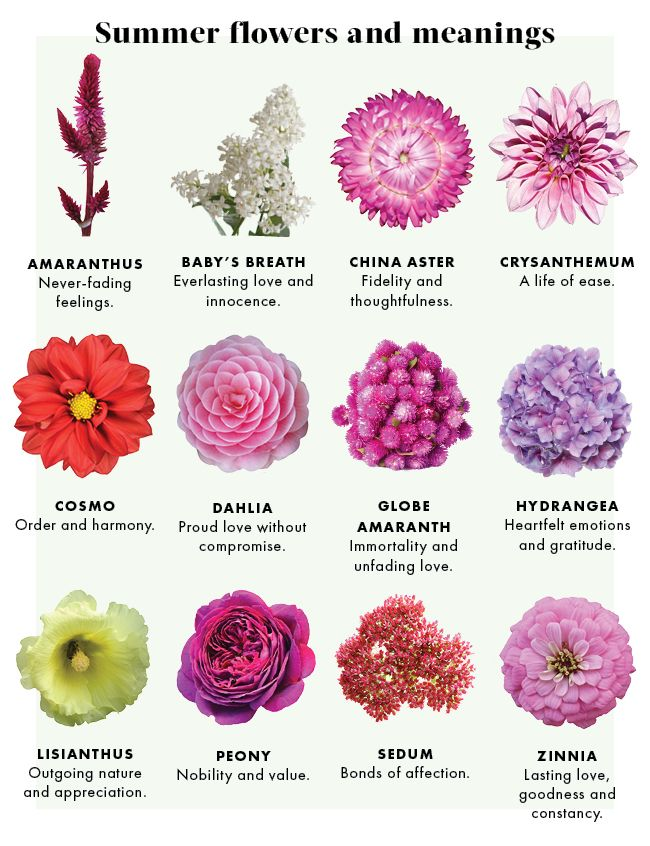The Meaning Of Flowers By Urban Botanicals Haute Home Flower Meanings Summer