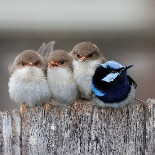 Birds of A Feather and Friend via  So cute!!!