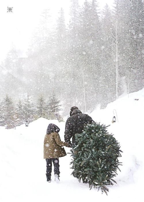 Picking the perfect Christmas tree.
