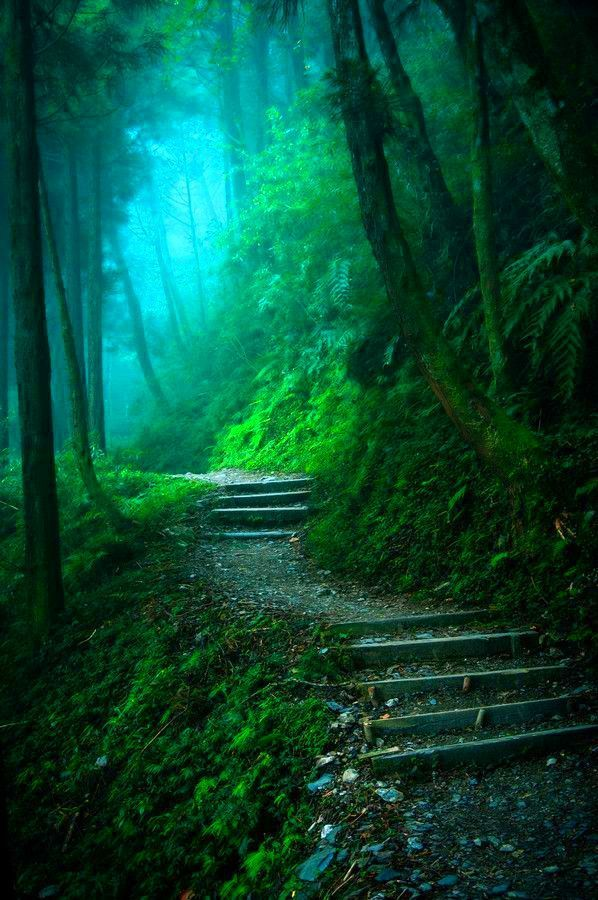 Into the Mystic, The Enchanted Wood photo