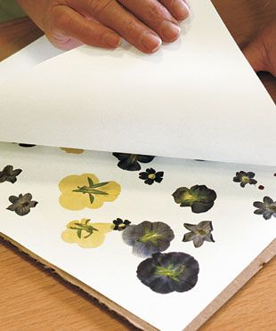 Pressing Flowers: Know how and patience are all you need to preserve summer's bounty. Find out how at http://www.finegardening.com/how-to/articles/pressing-flowers.aspx