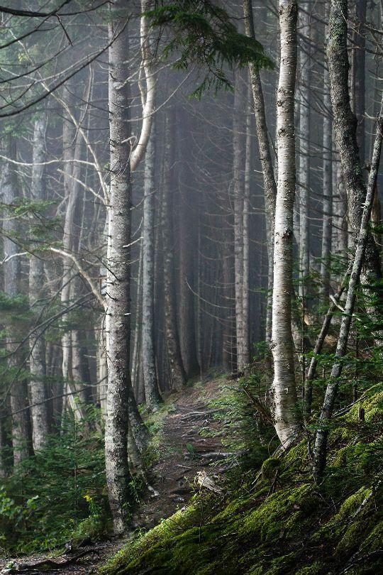 urbnite — tulipnight:   Foggy Forest byTracy Munson