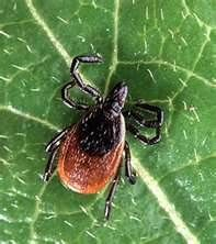 What you need to know about Lyme Disease - the symptoms. READ MORE @ www.organic4greenlivings.com