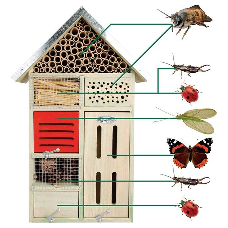 Hôtel à insectes   Hôtel à insectes, Insectes de jardin ...