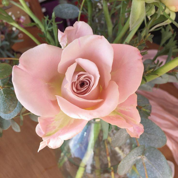 'Mentha' Rose www.theenchantedflower.co.uk
