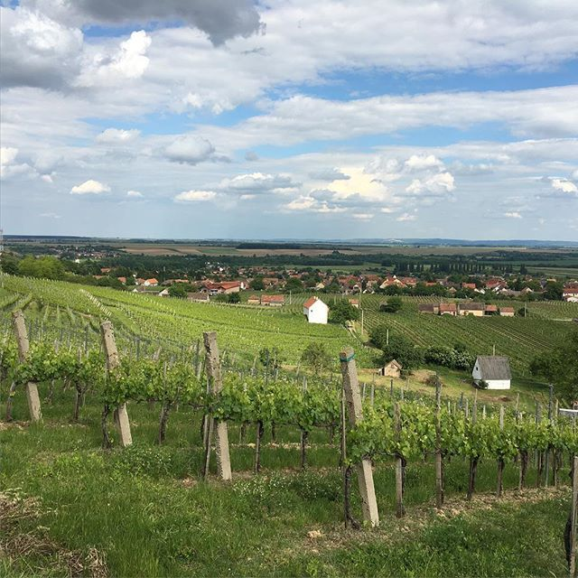 A lovely view! We spent the afternoon at the Polgar Winery in Villány! A beautiful view and a wonderful tour! #magyarliving #mmhungaryMay2016 #magyarmarketing #Hungary #villanywineregion #polgárwine