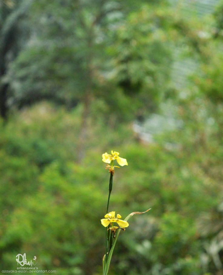 Wild Ground Orchid by azayaka-eizan.deviantart.com on @DeviantArt