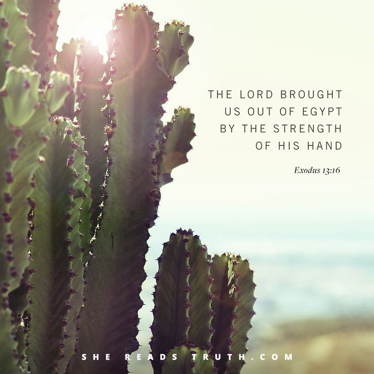 Exodus 13:16 | Lent 2018: See The Lord's Salvation Bible study from SheReadsTruth.com