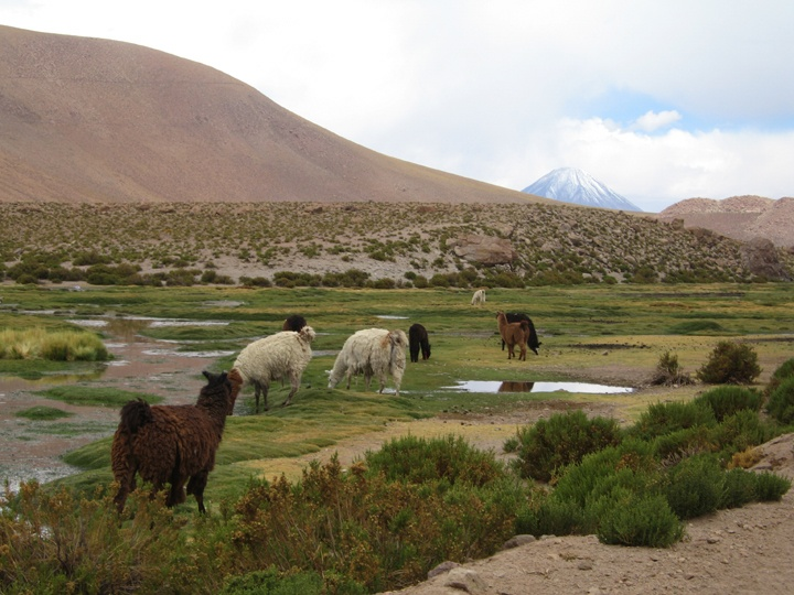 North of Chile. San Pedro de Atacama