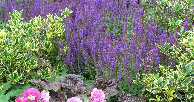 Ein immerblühendes Beet, das vom Frühjahr bis zum Herbst stets neue Blüten zeigt, ist der Traum jedes Hobbygärtners. Hier finden Sie die wichtigsten Gestaltungstipps für lange Blütenpracht und ein Drei-Jahreszeiten-Beet zum Nachpflanzen.
