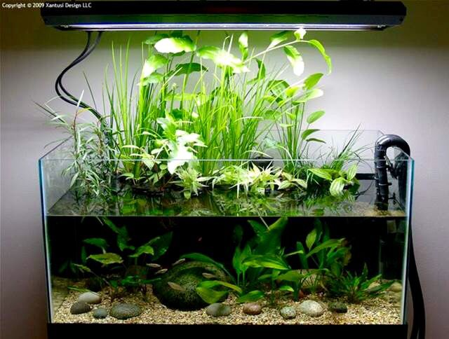 32 best vivarium images on pinterest reptiles for Fish tank setup ideas