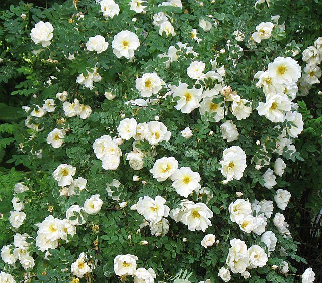 Kaunis ja kestävä kukkakimppu - Nettikauppa - Puutarha Auringontähti