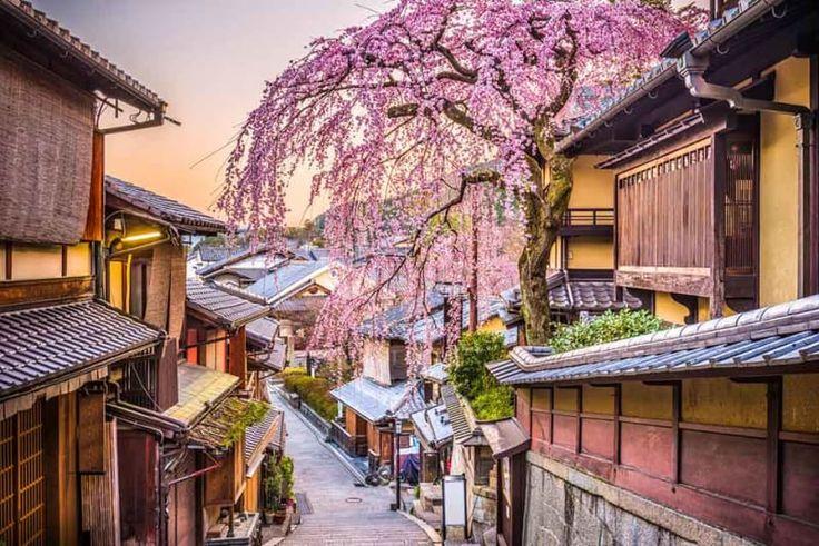 The Japanese Cherry Blossom Forecast For 2018  | VIVA Lifestyle & Travel