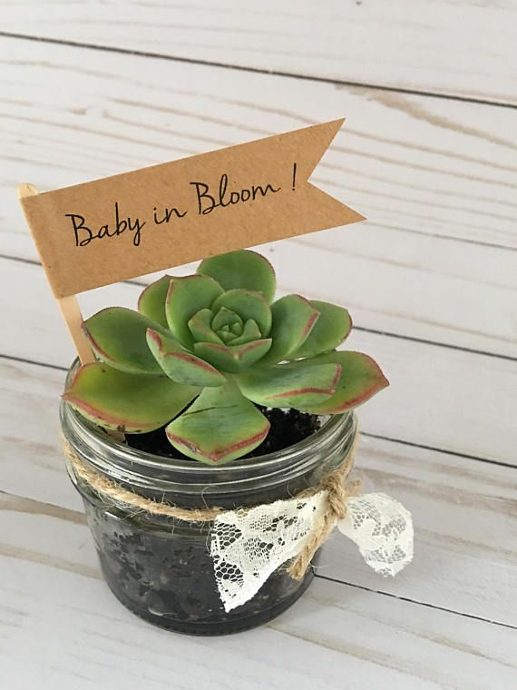 Baby in Bloom Plant Flags Baby Shower Plant Favors Watch Me