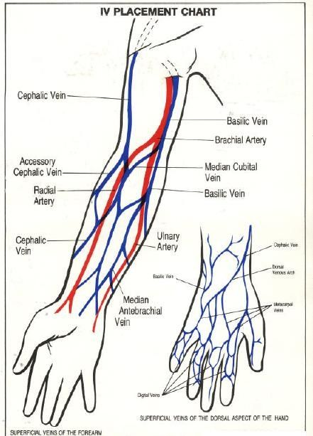 IV Placement Chart - Blood vessels of the arm and hand ...