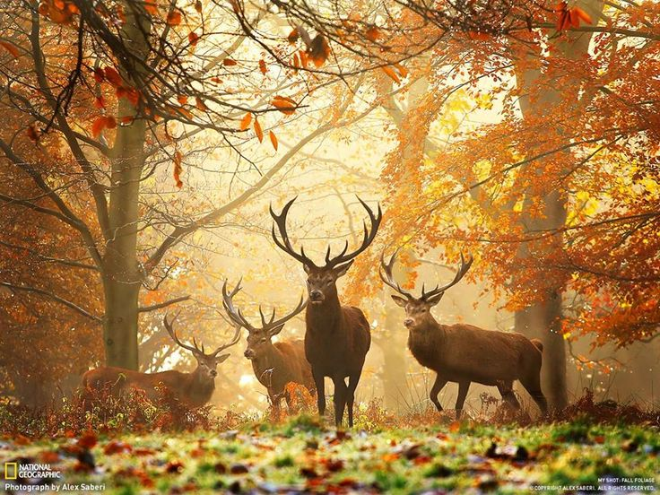 cannock chase # My woodland friends at the Chase !
