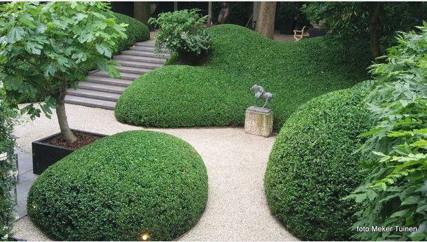 Met schijnhulst of osmanthus burkwoodii kun je prachtige groene scullpturale vormen maken. Pure schoonheid.