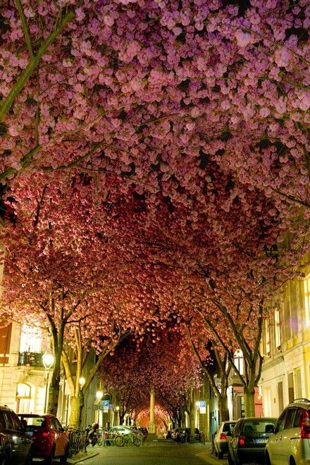 Bonn, Germany with beautiful blooming trees.