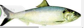Arti mimnpi menangkap ikan untuk anda baca. silahakn simak ualsan jelanys. semoga anda suka saja deh ya