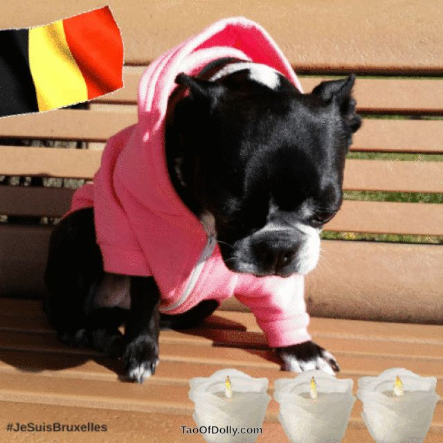 DOLLY PAWCIRCLE Pawlease join me. Let's hold hands and paws and bow our heads to observe a minute of silence for the victims in Brussels. Our hearts go out to their families and furiends ❤ Dolly #JeSuisBruxelles