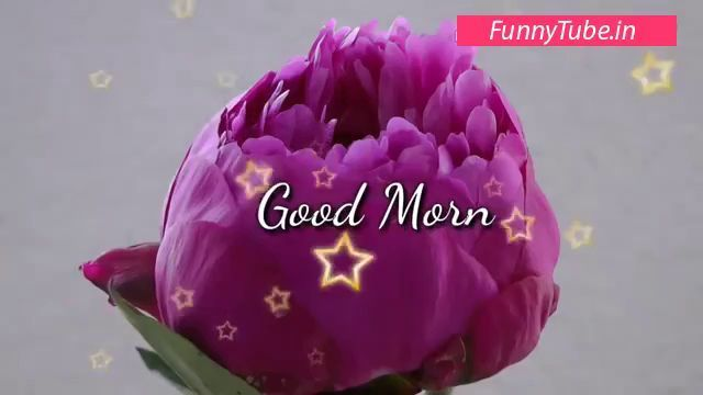 Good Morning Wishes Good Morning Message Good Morning Sms
