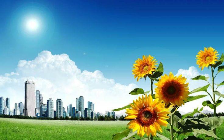 Wallpaper Bunga Matahari Yang Indah
