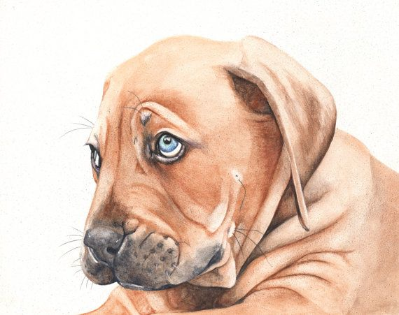 French Bordeaux Puppy watercolour painting - print of puppy watercolour painting - pet lover gift idea - puppy print - nursery art